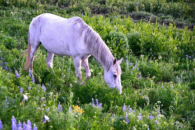 horse in wildflower larry lamsa